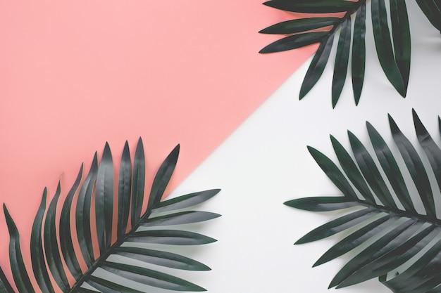열 대 잎 단풍 식물 가까이 컬러 복사 공간 배경. 자연과 여름 개념 아이디어입니다. 장식 디자인에 대 한