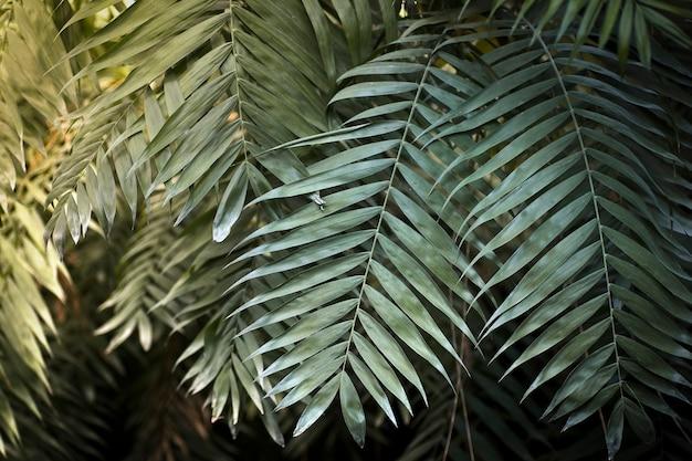식물이 있는 정글 배경 열대 우림의 열대 잎