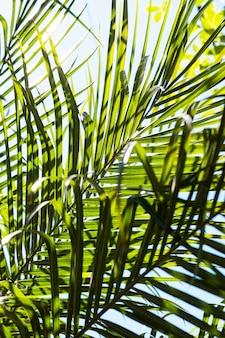 外の太陽の下で熱帯の葉
