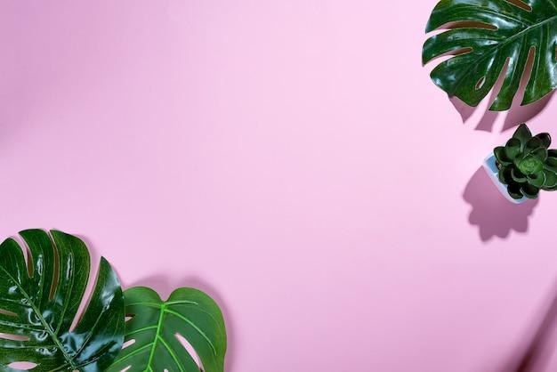 Тропические листья monstera и echeviera на розовом мягком фоне