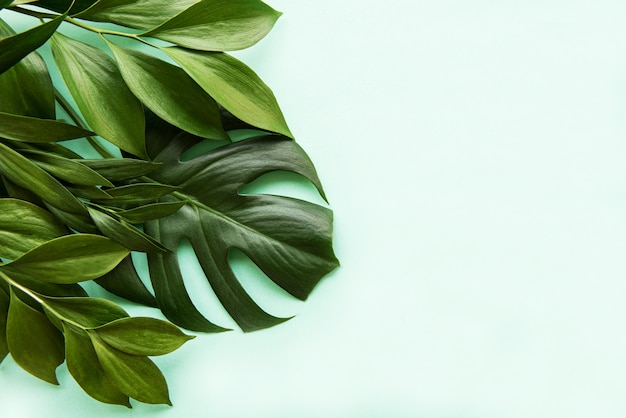 Tropical leaves and monstera leaf