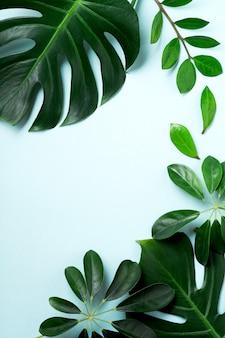 熱帯はピンクの背景にモンステラを残します。コピースペースと青い背景に緑のモンステラ植物の葉。上面図。
