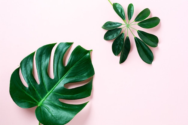 熱帯はピンクの背景にモンステラを残します。コピースペースとピンクの背景に緑のモンステラ植物の葉。上面図。