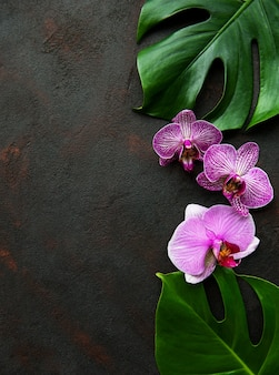 Tropical leaves monstera and  orchid flowers