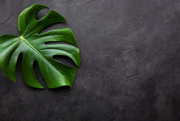 Tropical leaves monstera