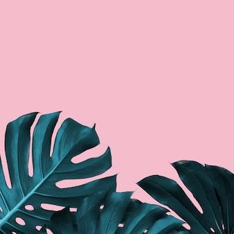 Тропические листья монстеры на розовом дуотоне. тропическая рамка с местом для текста, модный дизайн