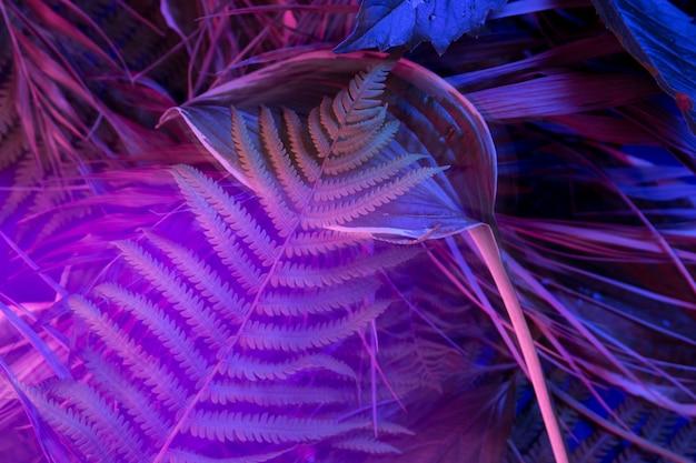 黒の明るい背景に熱帯の葉