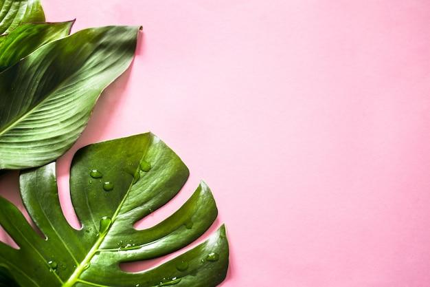 色付きの背景に熱帯の葉
