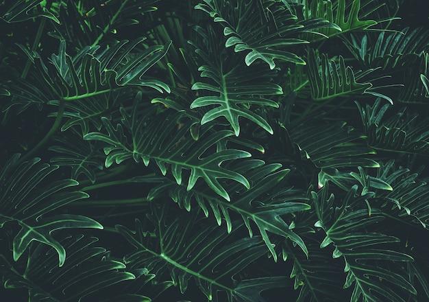 Тропические листья на черном