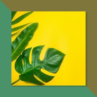 色の背景に熱帯の葉
