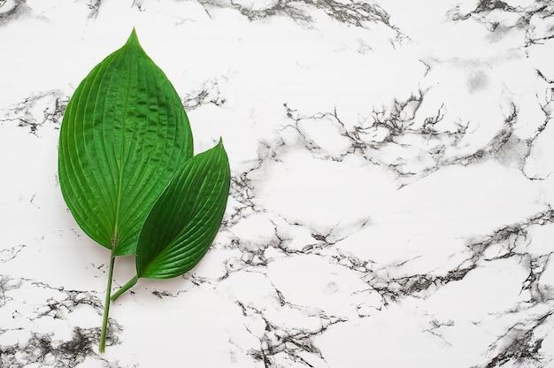 Тропические листья на розовом фоне. концепция минимальной природы. квартира