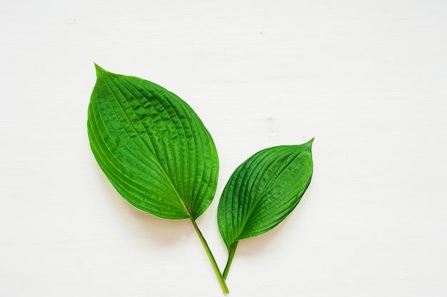 Тропические листья на белом фоне. концепция минимальной природы. квартира
