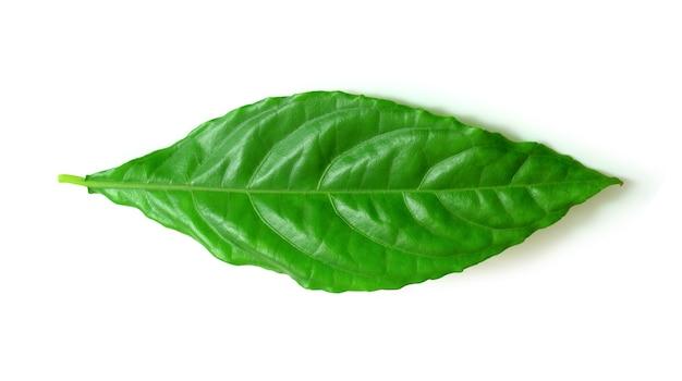 白い背景の上の熱帯の葉