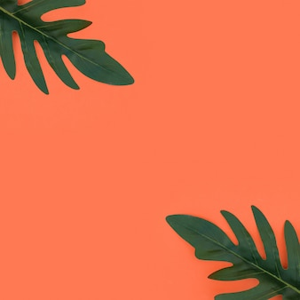 Tropical leaves on orange background