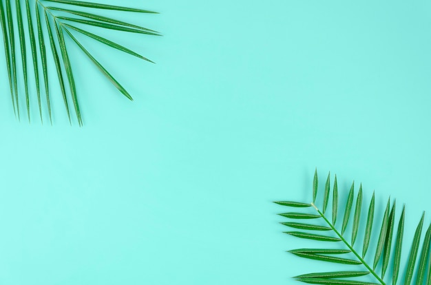 Tropical leaves palm tree on a blue background with space for text