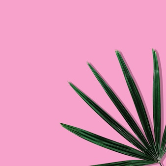 Tropical leaves on pastel pink background.