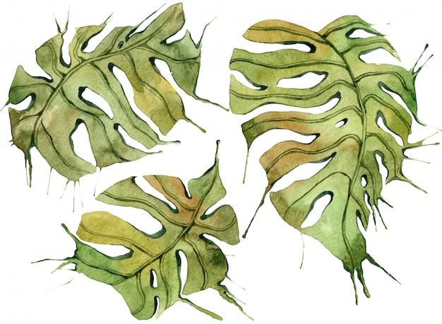 熱帯の葉セット。ジャングル植物水彩イラスト、花の要素、ヤシの葉など。