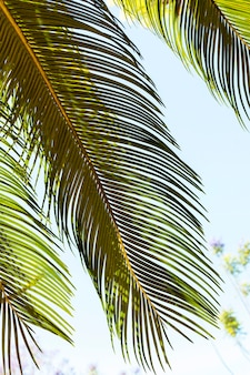 Tropical leaves in the sun outdoors