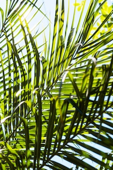 Tropical leaves in the sun outside