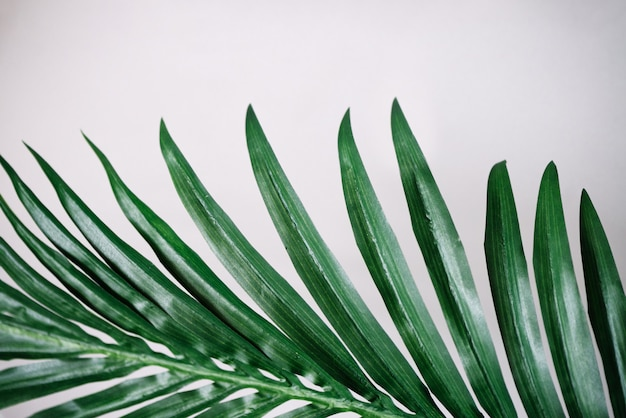 Tropical leaves on white wall surface