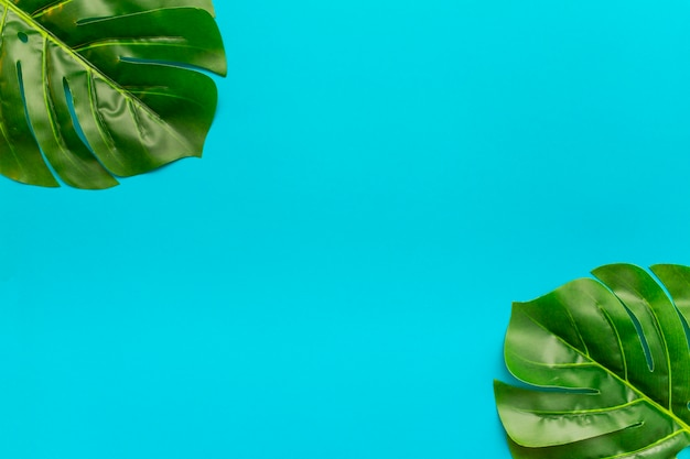 Tropical leaves with copy space in the middle