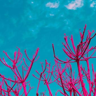 열대 변태 핑크 식물 최소한의 예술 디자인