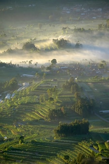 Tropical misty morning mountain scenery during summertime paddy terracing Premium Photo