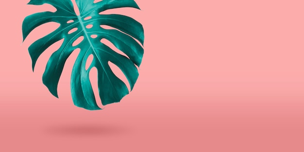 Tropical monstera leaf on coral color background minimal summer