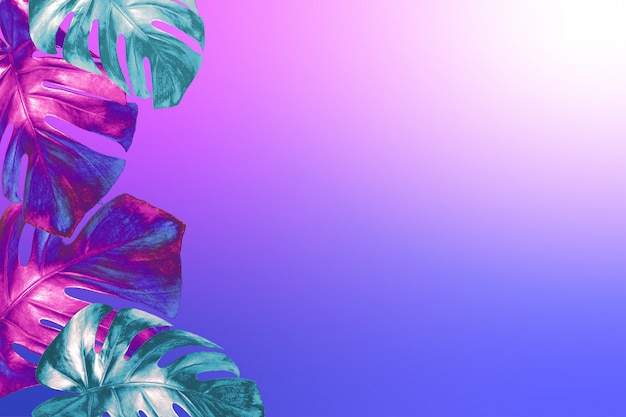 Tropical monstera leaves colored in trendy neon colors on fashionable neon pink blue gradient background.