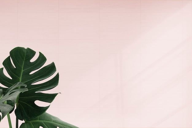 Тропические листья монстеры на розовом фоне