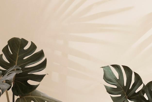 ヤシの葉の影と熱帯のmonsteraの葉