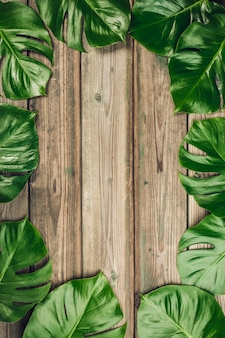 Tropical monstera leaves on wooden background