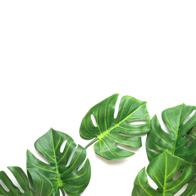 Tropical monstera palm leaves tree background