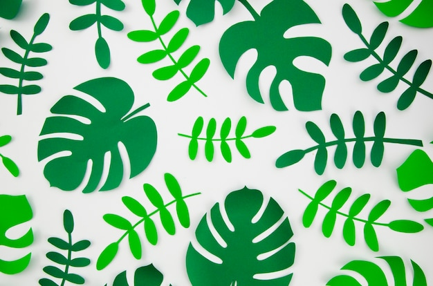 Tropical monstera plants in the style of cut paper