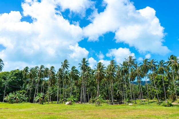 Тропический природный ландшафт пальмовая роща и голубое небо.
