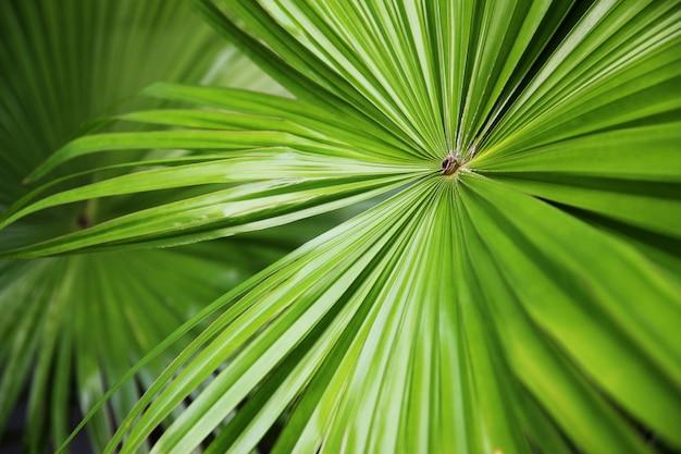 熱帯自然緑のファンのヤシの葉の背景