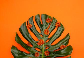 Tropical Orange Background
