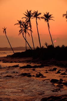 トロピカルオレンジサンセットパームシルエット風景。スリランカビーチ