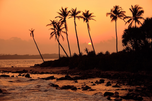 Tropical orange sunset palm silhouette landscape