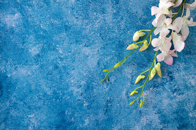 Tropical orchid on blue and white background