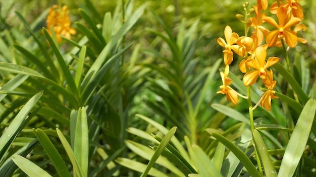 봄 정원, 무성한 단풍에 열 대 난초 꽃. 자연의 이국적인 꽃과 잎