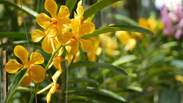 봄 정원, 맑은 무성한 단풍에 열 대 난초 꽃. 천연 이국적인 꽃의 꽃