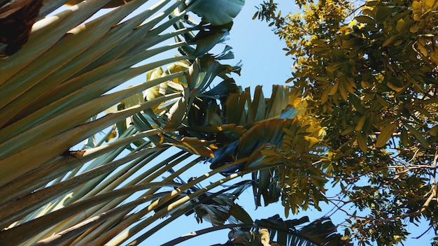 Тропические пальмы и банановые листья, цветочный узор фона, реальное фото