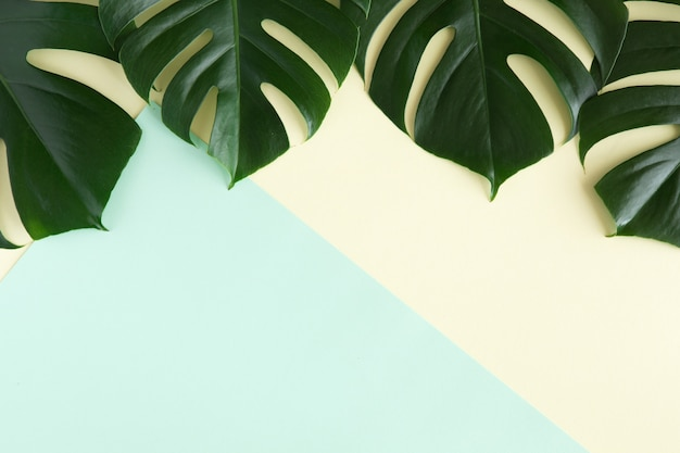 熱帯のヤシの背景。青と黄色の背景に緑の熱帯の創造的なレイアウトを残します。最小限の夏フラットレイアウトコンセプトコピースペース