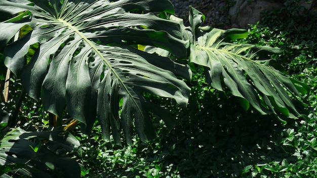 Tropical palm and banana leaves, floral pattern background, real photo