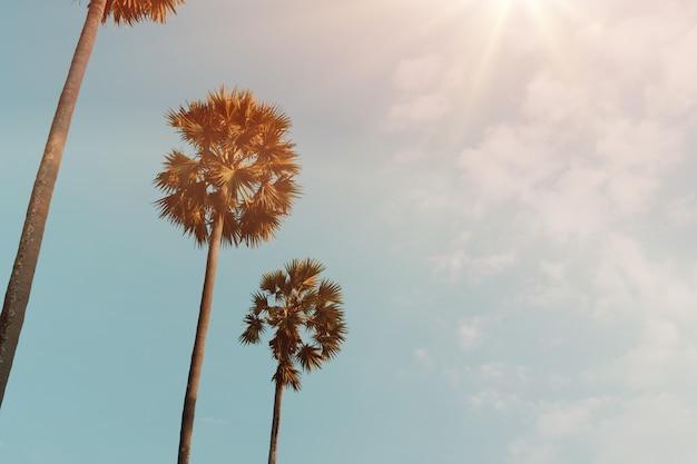 夕焼け空のフレアとボケ自然の背景に熱帯のヤシのココナッツの木。