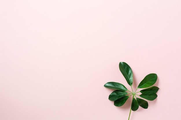 Tropical palm leaf frame on pink background with copy space. flat lay. top view. summer or spring nature concept.