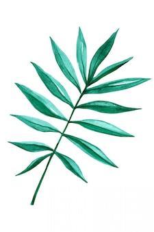 熱帯のヤシの葉を白で隔離されます。手作りの水彩画。