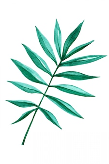 Tropical palm leaf isolated on white. handmade watercolor.