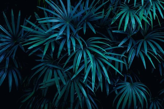熱帯のヤシの葉の自然の背景